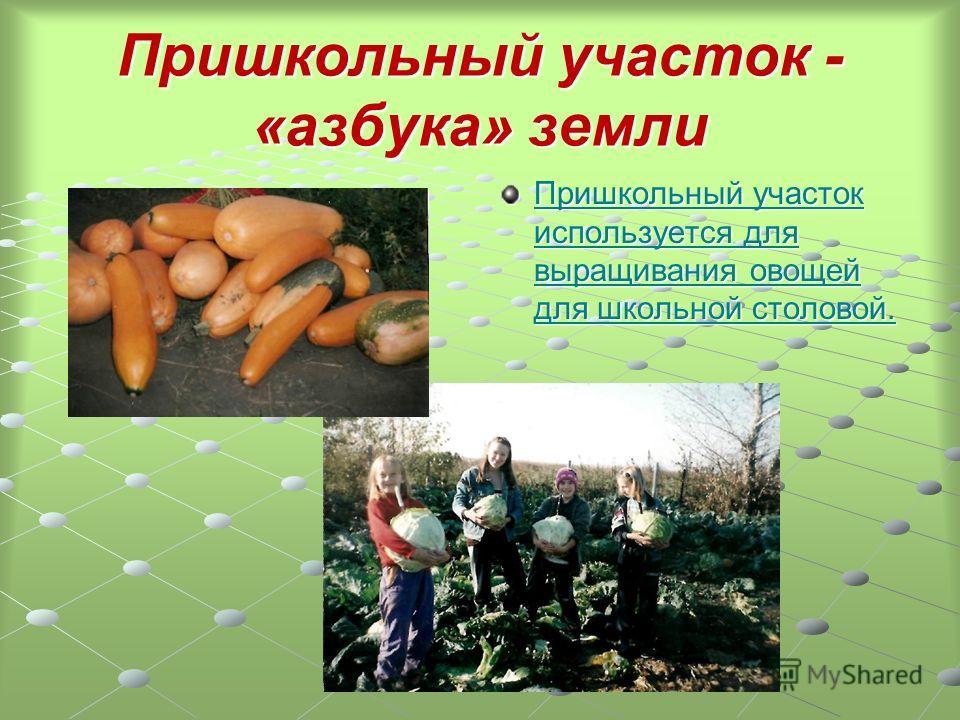 Пришкольный участок - «азбука» земли Пришкольный участок используется для выращивания овощей для школьной столовой. Пришкольный участок используется для выращивания овощей для школьной столовой. участок.doc