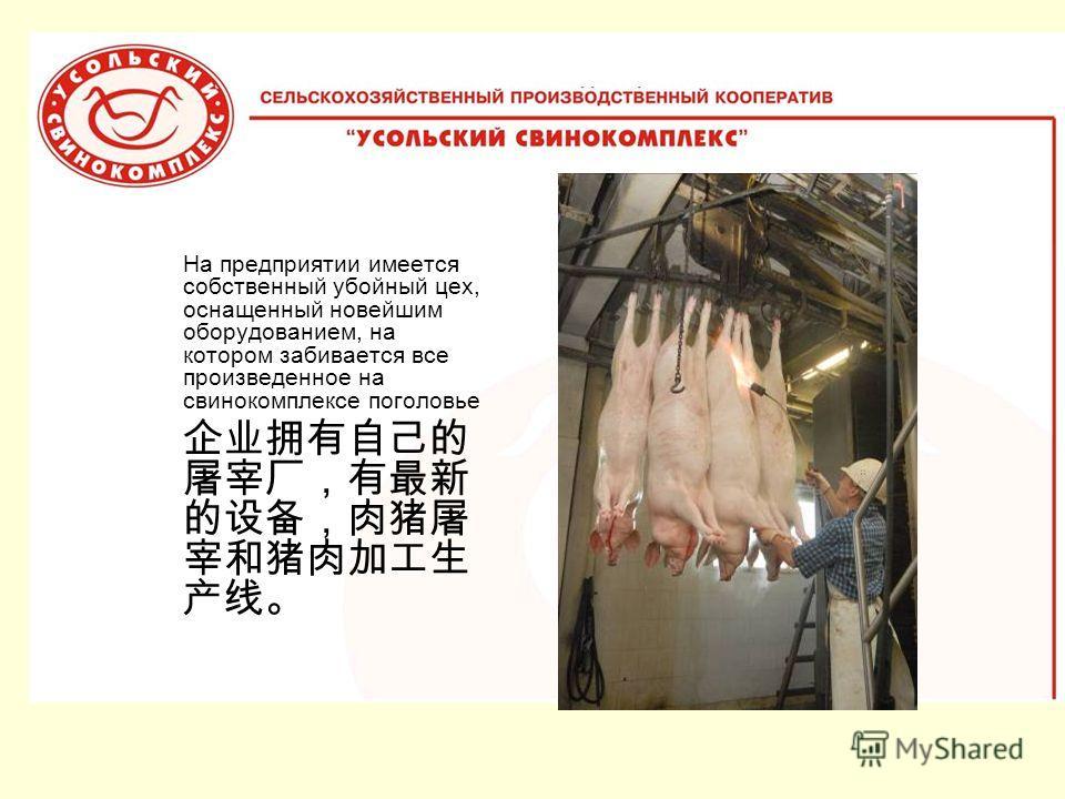 На предприятии имеется собственный убойный цех, оснащенный новейшим оборудованием, на котором забивается все произведенное на свинокомплексе поголовье