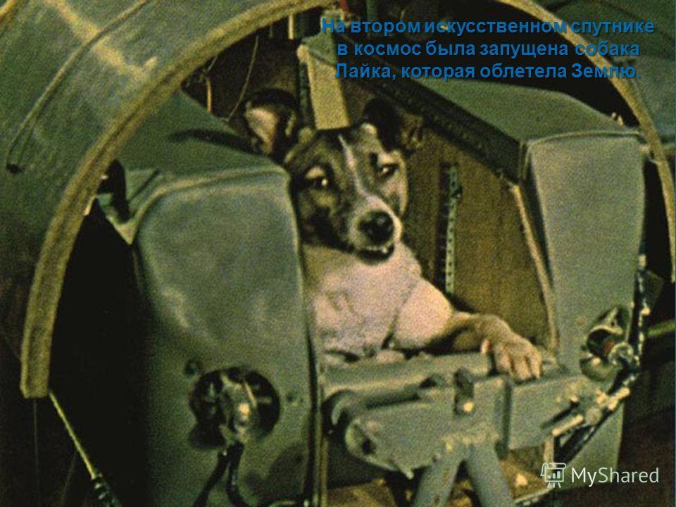 На втором искусственном спутнике в космос была запущена собака Лайка, которая облетела Землю.