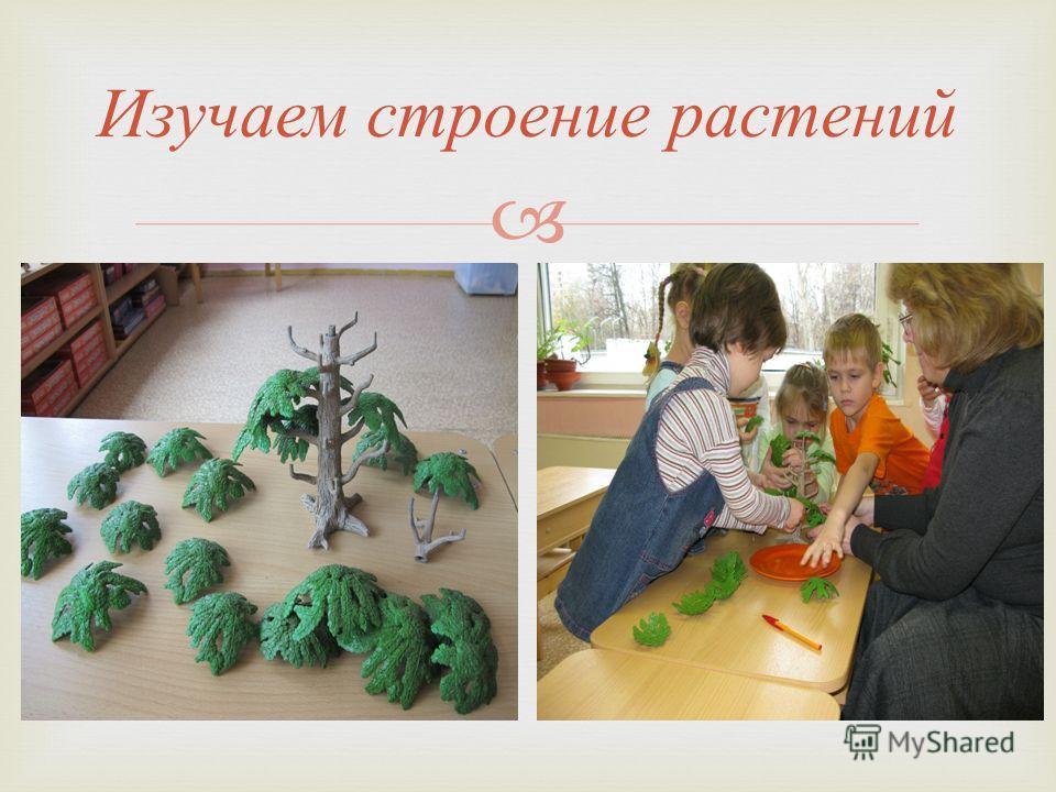 Изучаем строение растений