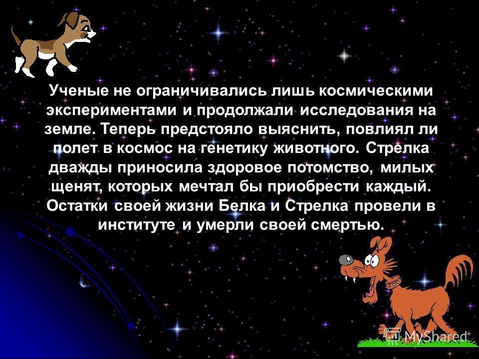 Ученые не ограничивались лишь космическими экспериментами и продолжали исследования на земле. Теперь предстояло выяснить, повлиял ли полет в космос на генетику животного. Стрелка дважды приносила здоровое потомство, милых щенят, которых мечтал бы при