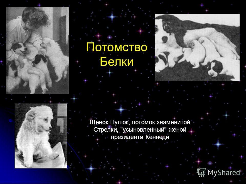 Потомство Белки Щенок Пушок, потомок знаменитой Стрелки, усыновленный женой президента Кеннеди