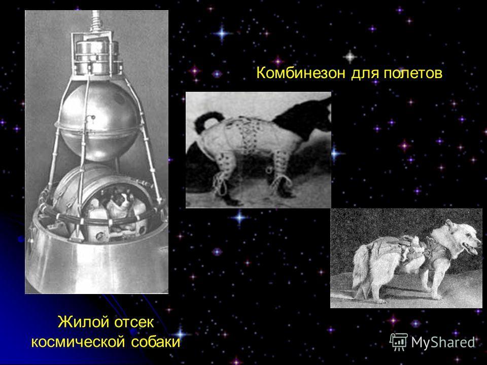 Жилой отсек космической собаки Комбинезон для полетов
