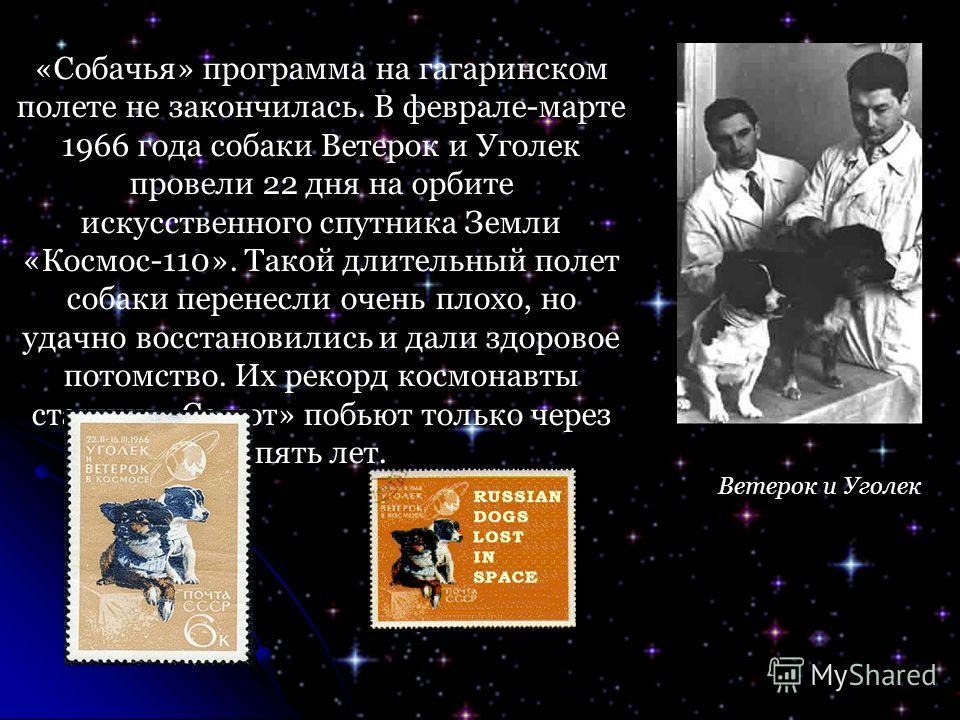 «Собачья» программа на гагаринском полете не закончилась. В феврале-марте 1966 года собаки Ветерок и Уголек провели 22 дня на орбите искусственного спутника Земли «Космос-110». Такой длительный полет собаки перенесли очень плохо, но удачно восстанови