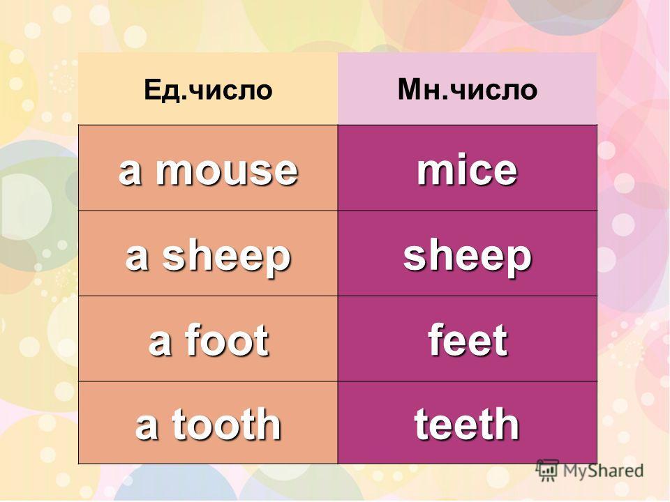 Ед.число Мн.число a mouse mice a sheep sheep a foot feet a tooth teeth