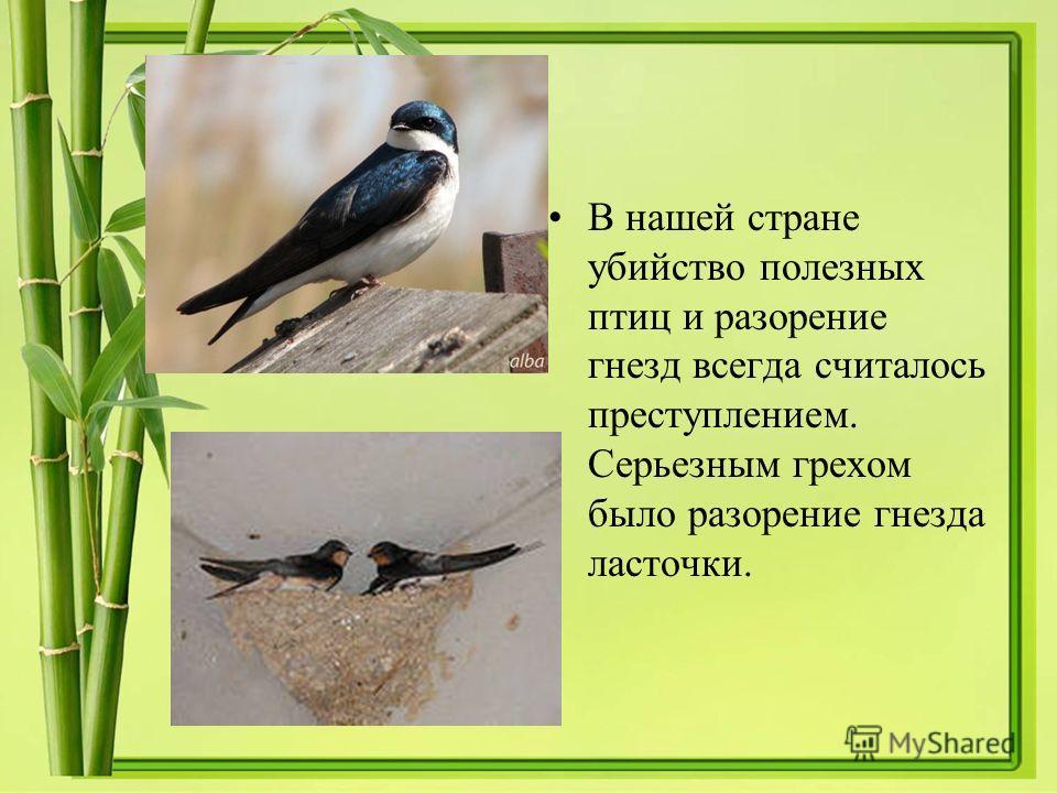 В нашей стране убийство полезных птиц и разорение гнезд всегда считалось преступлением. Серьезным грехом было разорение гнезда ласточки.