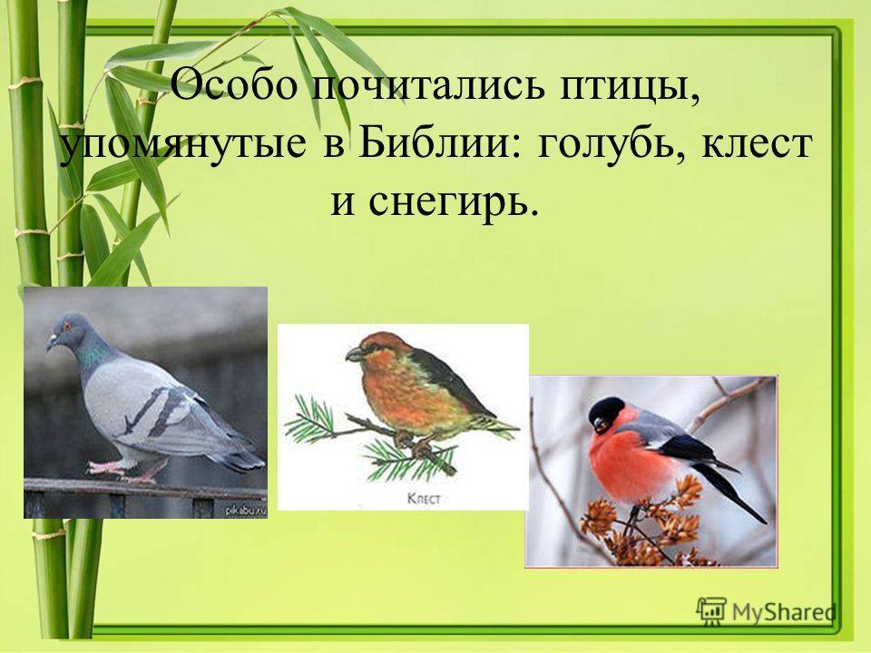 Особо почитались птицы, упомянутые в Библии: голубь, клест и снегирь.