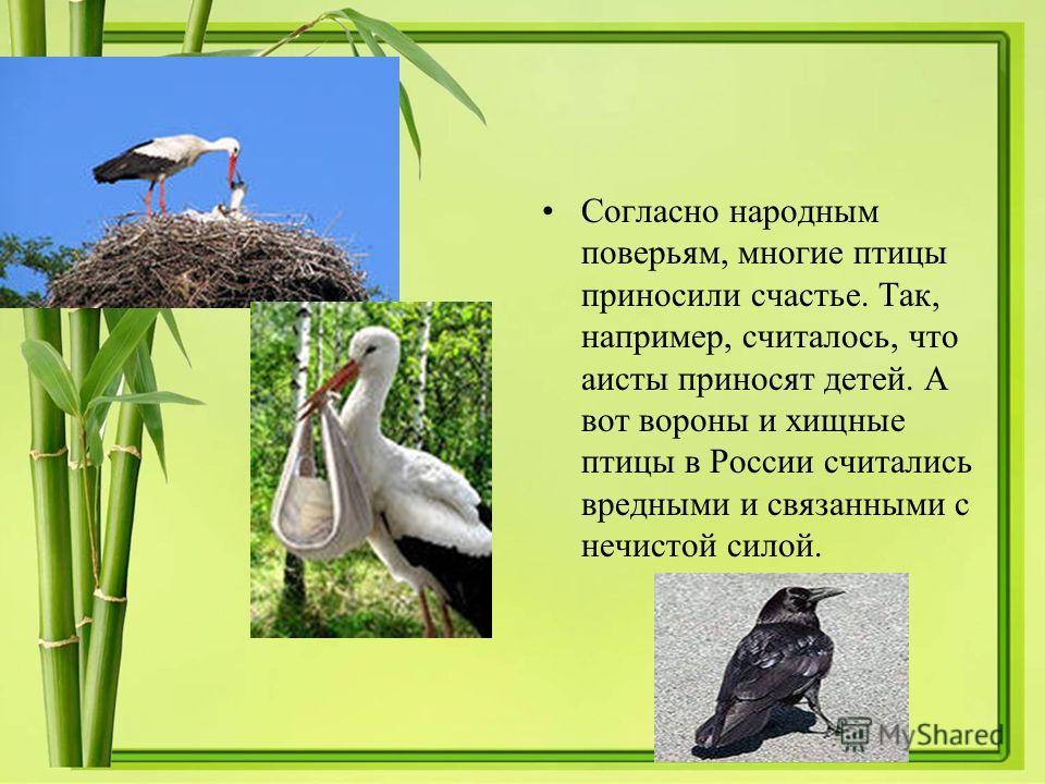 Согласно народным поверьям, многие птицы приносили счастье. Так, например, считалось, что аисты приносят детей. А вот вороны и хищные птицы в России считались вредными и связанными с нечистой силой.