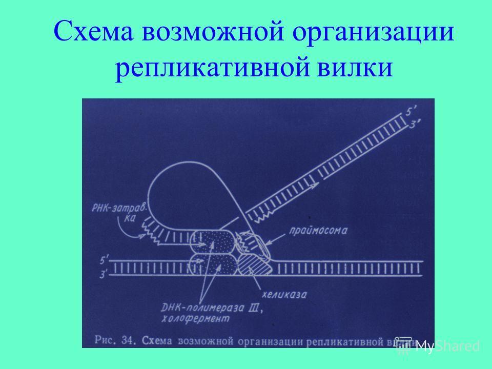 Схема возможной организации репликативной вилки