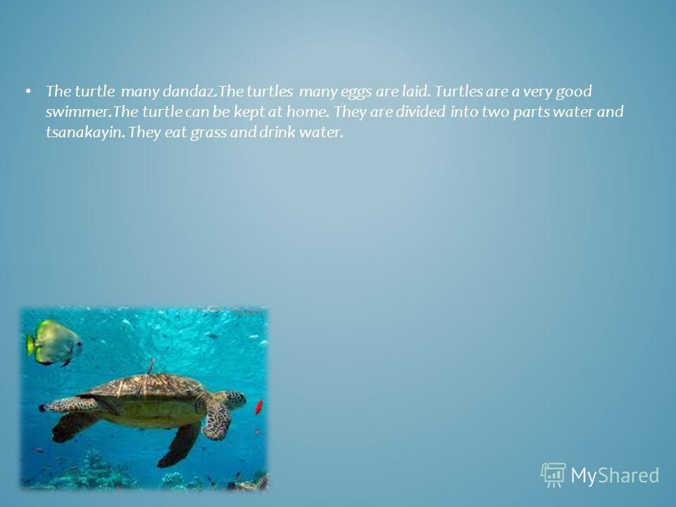The turtle many dandaz.The turtles many eggs are laid. Turtles are a very good swimmer.The turtle can be kept at home. They are divided into two parts water and tsanakayin. They eat grass and drink water.