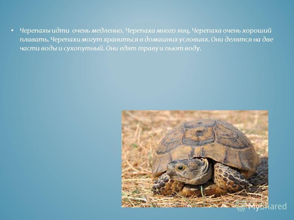 Черепахы идти очень медленно. Черепаха много яиц. Черепаха очень хороший плавать. Черепахи могут храниться в домашних условиях. Они делятся на две части воды и сухопутный. Они едят траву и пьют воду.