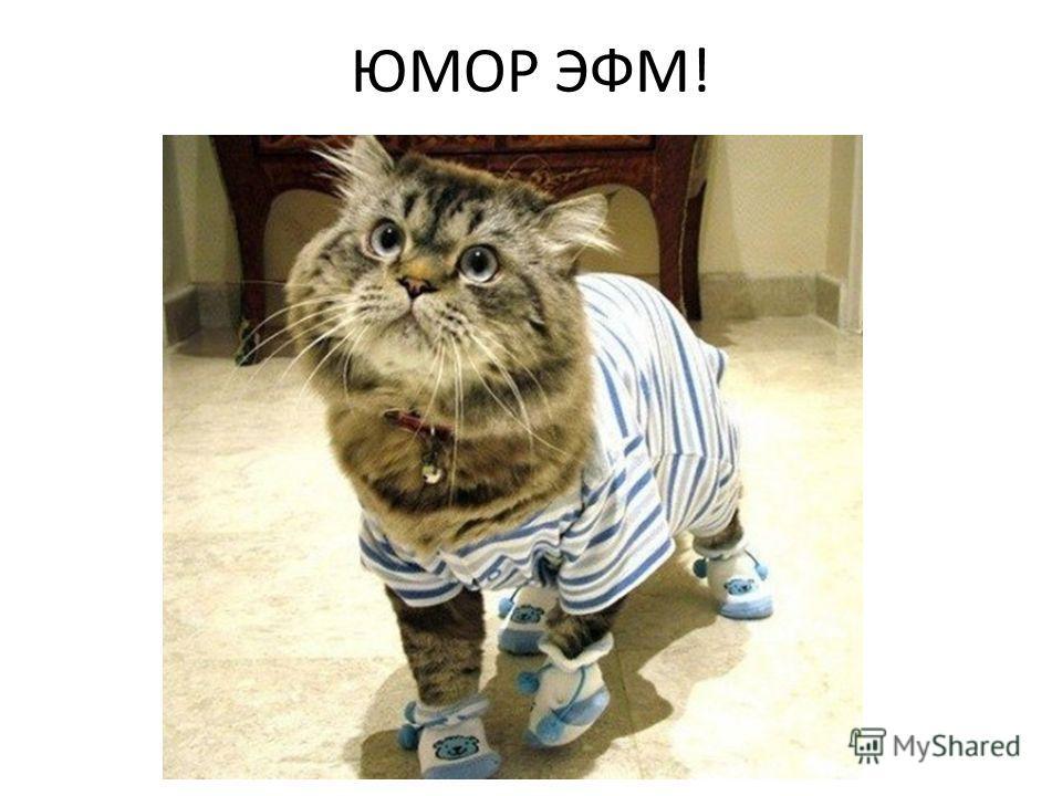 ЮМОР ЭФМ!