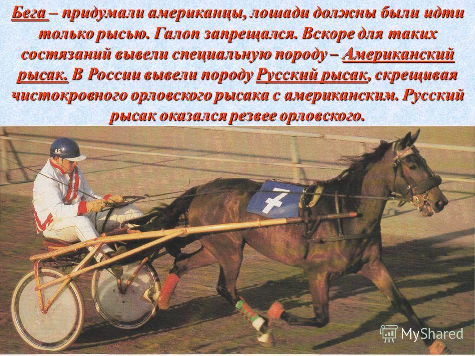 Бега – придумали американцы, лошади должны были идти только рысью. Галоп запрещался. Вскоре для таких состязаний вывели специальную породу – Американский рысак. В России вывели породу Русский рысак, скрещивая чистокровного орловского рысака с америка