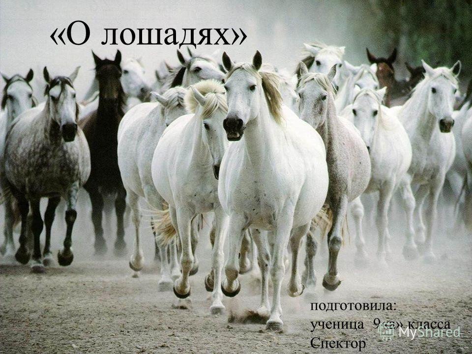 «О лошадях» подготовила: ученица 9«а» класса Спектор
