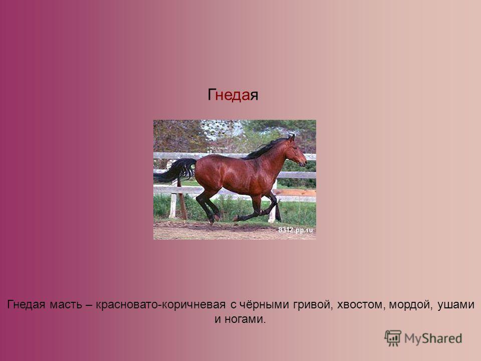 Гнедая Гнедая масть – красновато-коричневая с чёрными гривой, хвостом, мордой, ушами и ногами.