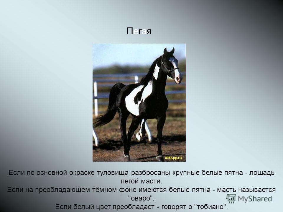 ПегаяПегая Если по основной окраске туловища разбросаны крупные белые пятна - лошадь пегой масти. Если на преобладающем тёмном фоне имеются белые пятна - масть называется оваро. Если белый цвет преобладает - говорят о тобиано.