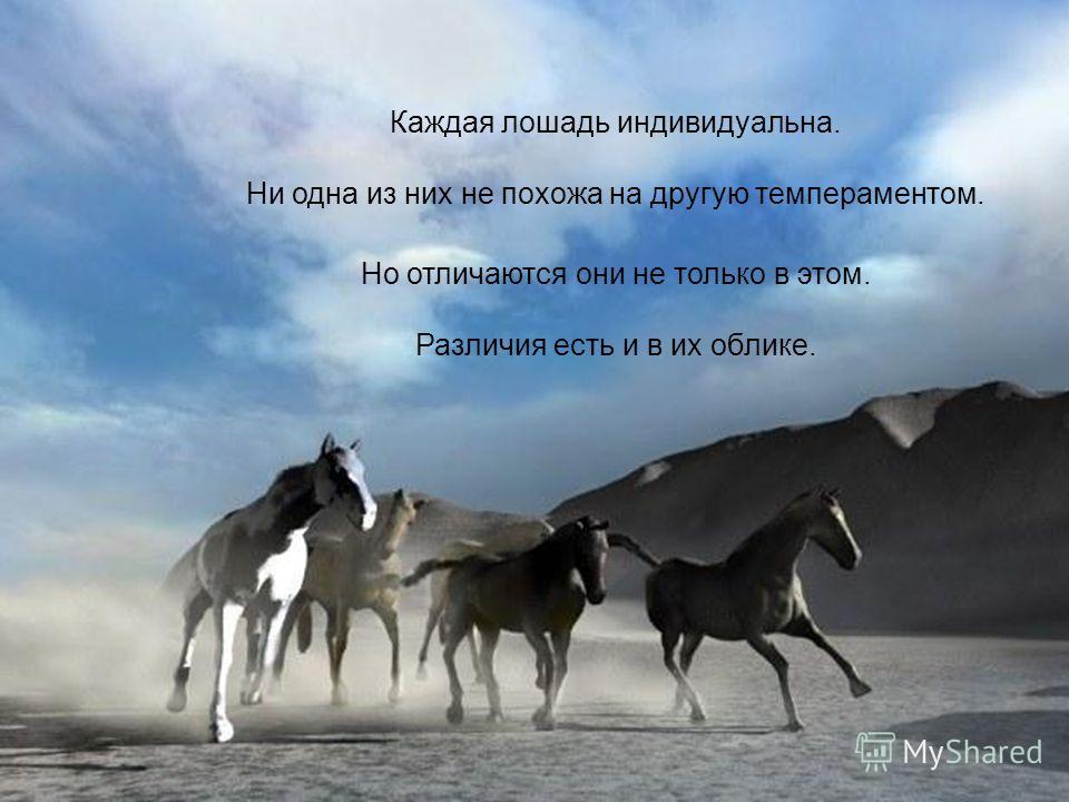 Каждая лошадь индивидуальна. Ни одна из них не похожа на другую темпераментом. Но отличаются они не только в этом. Различия есть и в их облике.