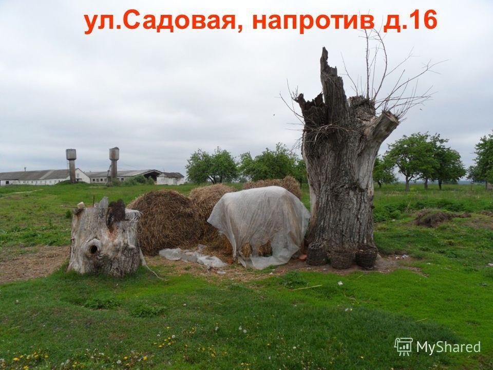 ул.Садовая, напротив д.16