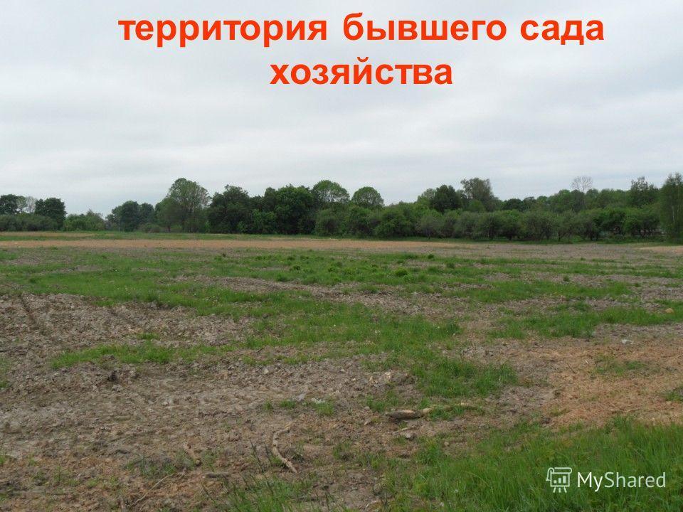 территория бывшего сада хозяйства