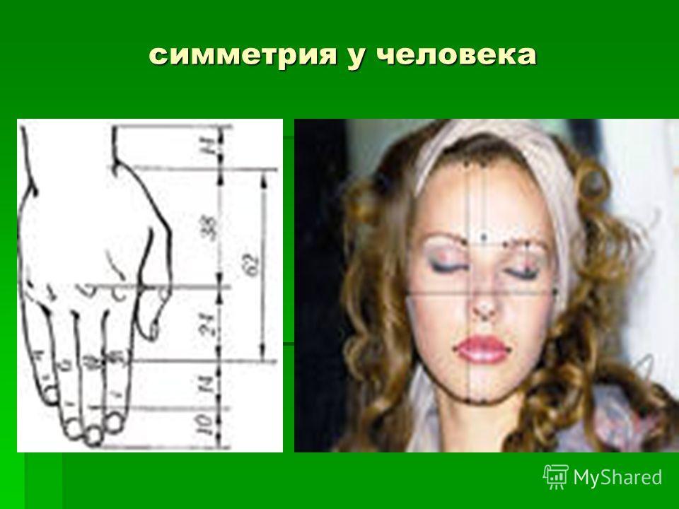 симметрия у человека