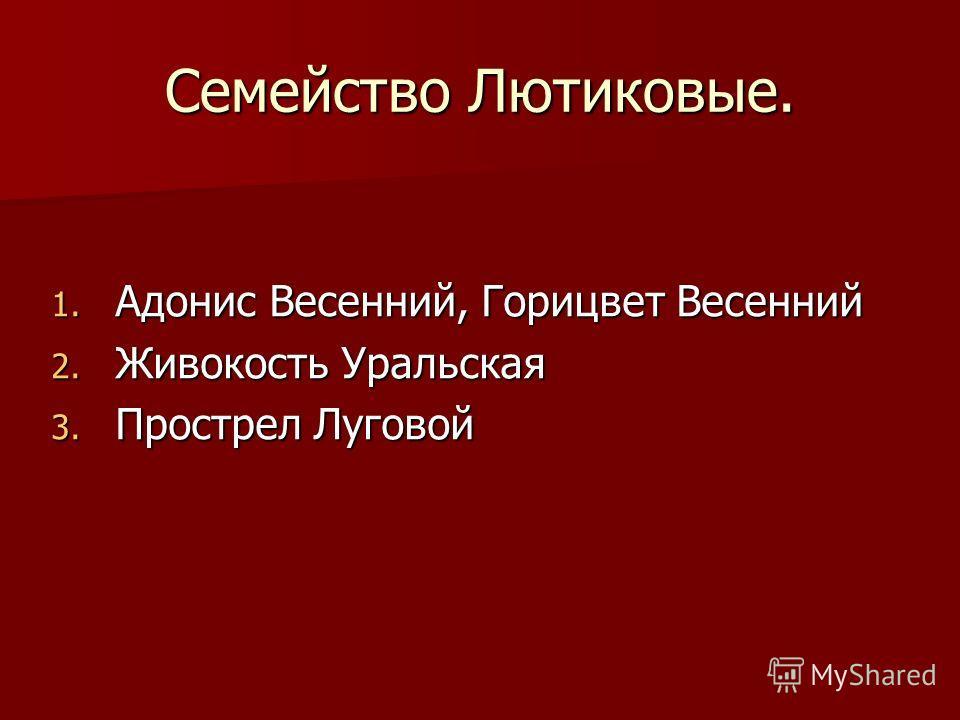 Семейство Лютиковые. 1. Адонис Весенний, Горицвет Весенний 2. Живокость Уральская 3. Прострел Луговой