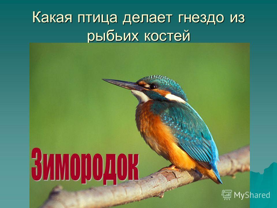 Какая птица делает гнездо из рыбьих костей