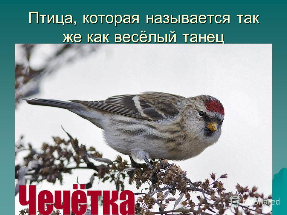 Птица, которая называется так же как весёлый танец