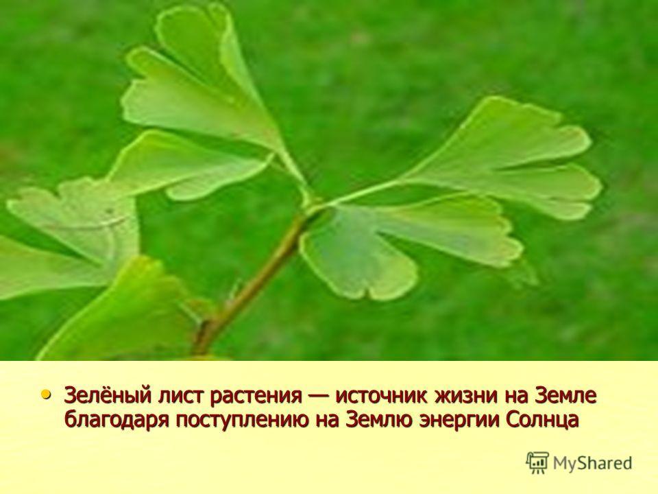 Зелёный лист растения источник жизни на Земле благодаря поступлению на Землю энергии Солнца Зелёный лист растения источник жизни на Земле благодаря поступлению на Землю энергии Солнца