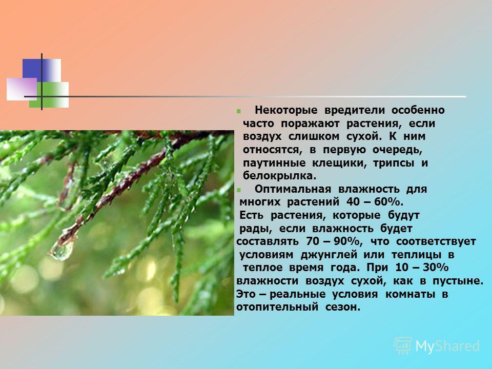 Некоторые вредители особенно часто поражают растения, если воздух слишком сухой. К ним относятся, в первую очередь, паутинные клещики, трипсы и белокрылка. Оптимальная влажность для многих растений 40 – 60%. Есть растения, которые будут рады, если вл