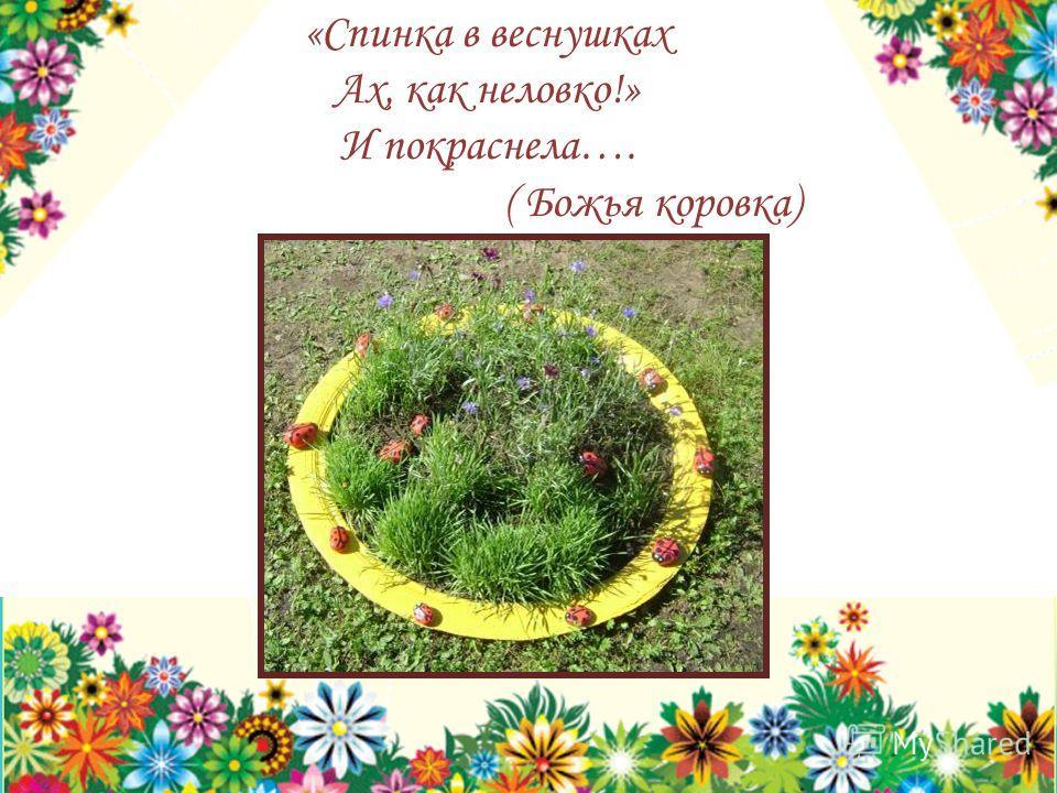 «Спинка в веснушках Ах, как неловко!» И покраснела…. ( Божья коровка)