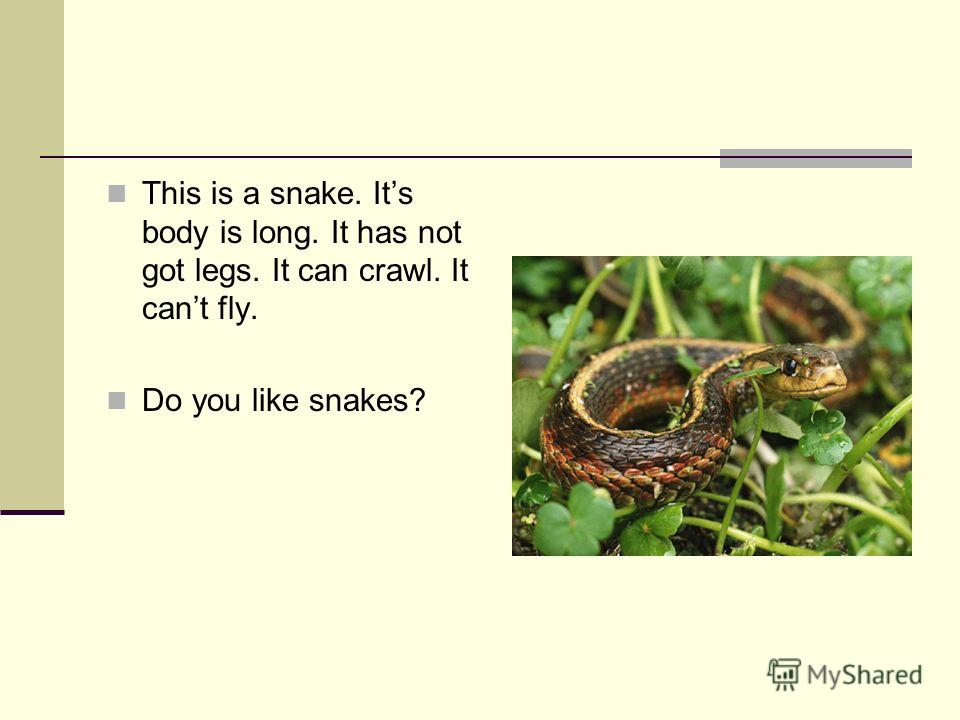 This is a snake. Its body is long. It has not got legs. It can crawl. It cant fly. Do you like snakes?