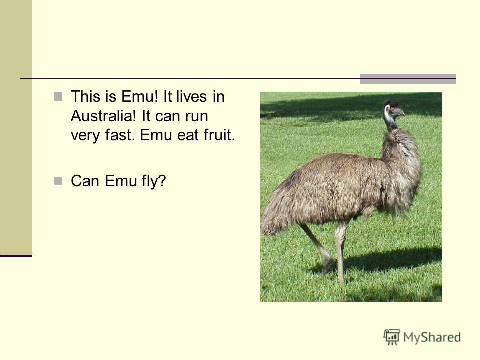 This is Emu! It lives in Australia! It can run very fast. Emu eat fruit. Can Emu fly?