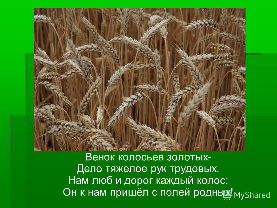 Венок колосьев золотых- Дело тяжелое рук трудовых. Нам люб и дорог каждый колос: Он к нам пришёл с полей родных!