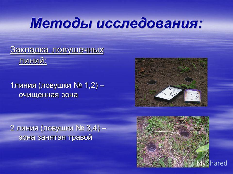 Закладка ловушечных линий: 1линия (ловушки 1,2) – очищенная зона 2 линия (ловушки 3,4) – зона занятая травой