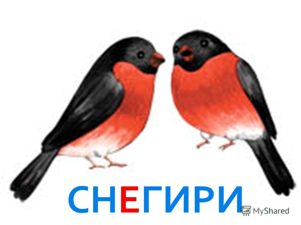 Птички на деревья сели, Посчитай-ка: раз, два, три… На зимовку прилетели С красной грудкой...