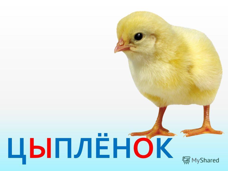 Весь я золотистый, Мягкий и пушистый. Я у курицы ребёнок, А зовут меня...