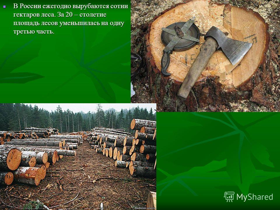 В России ежегодно вырубаются сотни гектаров леса. За 20 – столетие площадь лесов уменьшилась на одну третью часть. В России ежегодно вырубаются сотни гектаров леса. За 20 – столетие площадь лесов уменьшилась на одну третью часть.