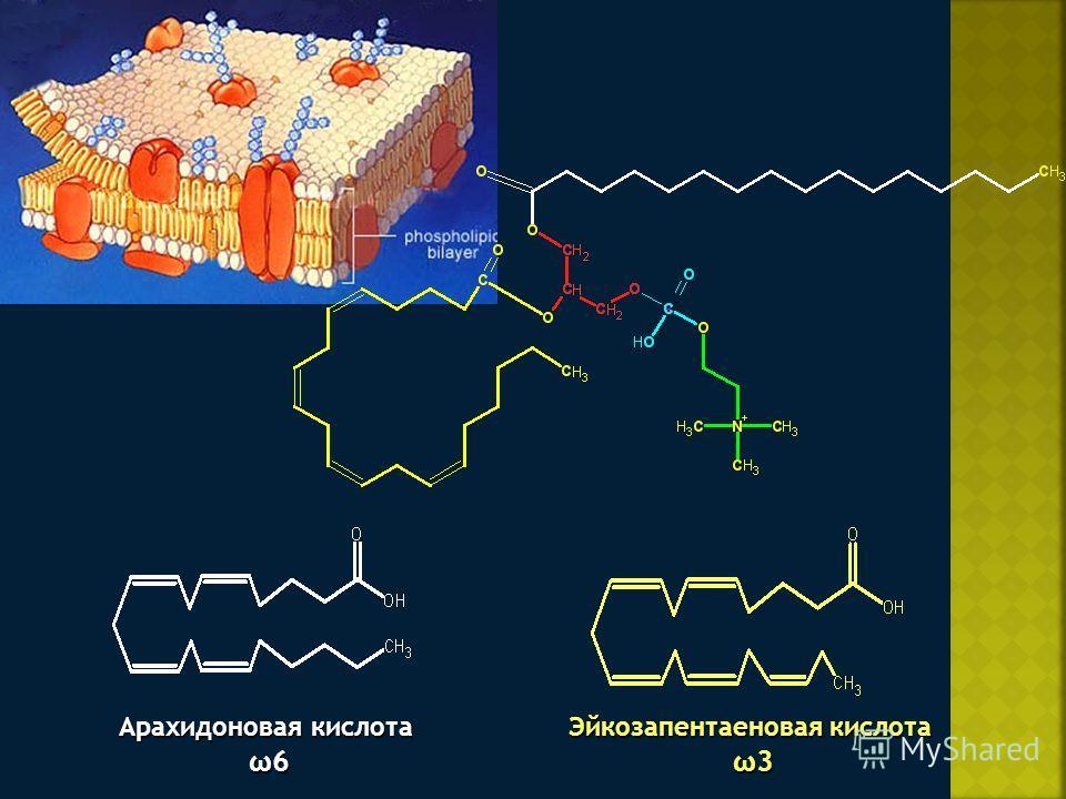 Арахидоновая кислота ω6 ω6 Эйкозапентаеновая кислота ω3