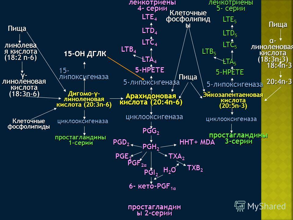 Пища линолева я кислота (18:2 n-6) γ- линоленовая кислота (18:3n-6) Клеточные фосфолипиды 15-ОН ДГЛК 15- липоксигеназа Дигомо-γ- линоленовая кислота (20:3n-6) циклооксигеназа Арахидоновая кислота (20:4n-6) Эйкозапентаеновая кислота (20:5n-3) Пища про