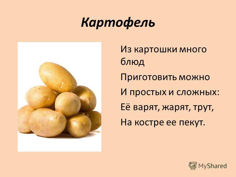 Картофель Из картошки много блюд Приготовить можно И простых и сложных: Её варят, жарят, трут, На костре ее пекут.