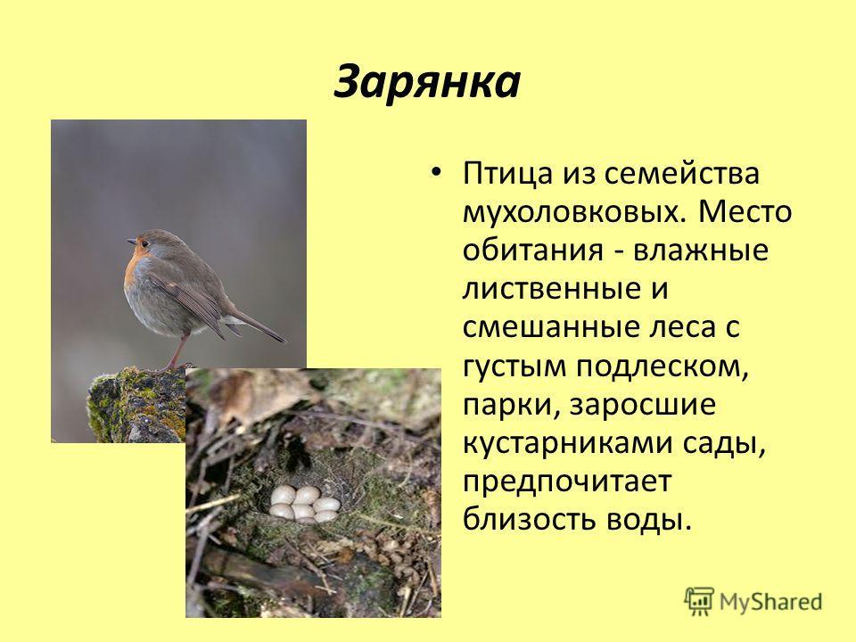 Зарянка Птица из семейства мухоловковых. Место обитания - влажные лиственные и смешанные леса с густым подлеском, парки, заросшие кустарниками сады, предпочитает близость воды.