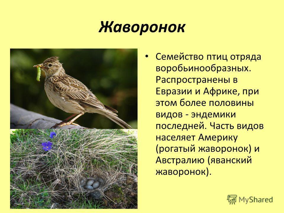 Жаворонок Семейство птиц отряда воробьинообразных. Распространены в Евразии и Африке, при этом более половины видов - эндемики последней. Часть видов населяет Америку (рогатый жаворонок) и Австралию (яванский жаворонок).