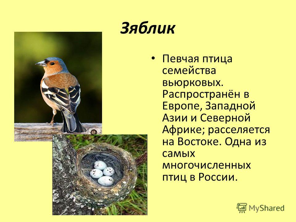 Зяблик Певчая птица семейства вьюрковых. Распространён в Европе, Западной Азии и Северной Африке; расселяется на Востоке. Одна из самых многочисленных птиц в России.