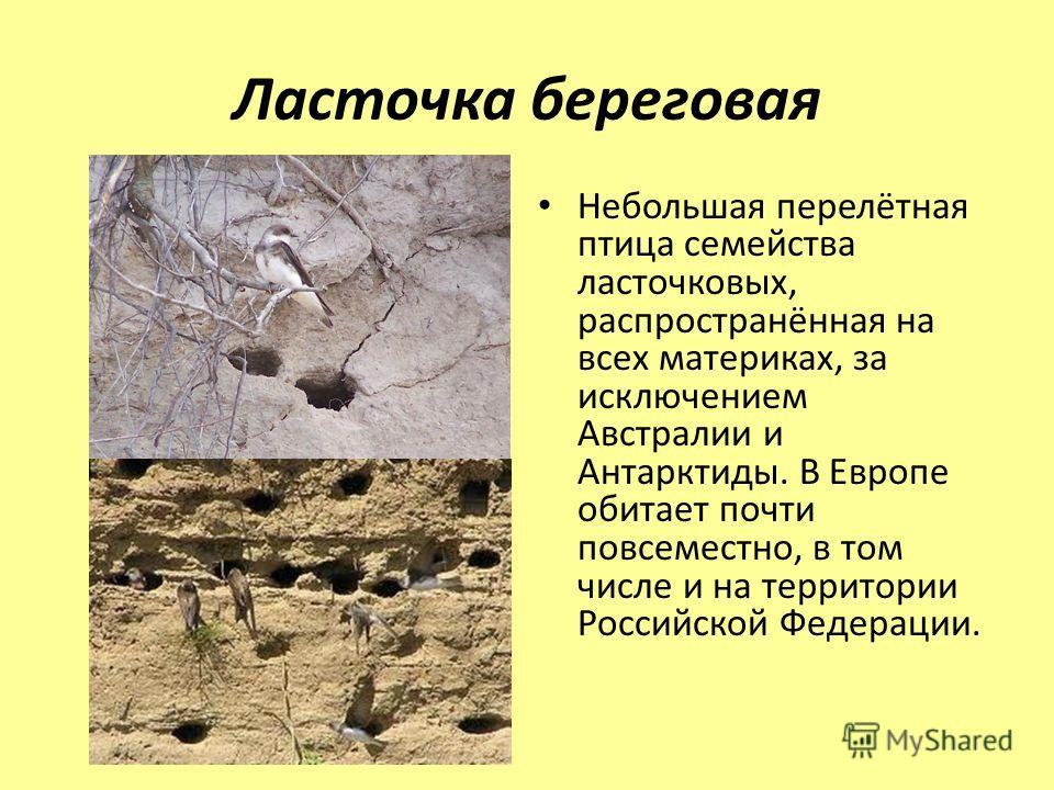 Ласточка береговая Небольшая перелётная птица семейства ласточковых, распространённая на всех материках, за исключением Австралии и Антарктиды. В Европе обитает почти повсеместно, в том числе и на территории Российской Федерации.