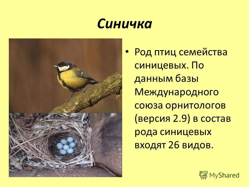 Синичка Род птиц семейства синицевых. По данным базы Международного союза орнитологов (версия 2.9) в состав рода синицевых входят 26 видов.