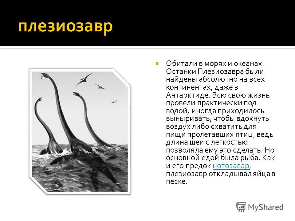 Данный вид обитал на территории сегодняшней России, Израиля, Китая и Северной Африки, останки особенно часто встречаются в осадочных породах Центральной Европы. Нотозавр мог находиться на суше и мог плавать под водой. В воде питался рыбой, а на суше