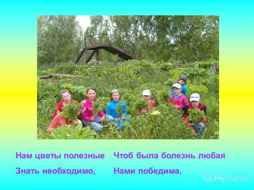 Нам цветы полезные Знать необходимо, Чтоб была болезнь любая Нами победима.