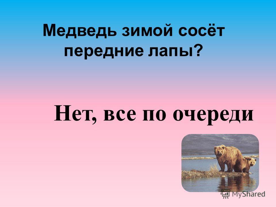 Медведь зимой сосёт передние лапы? Нет, все по очереди