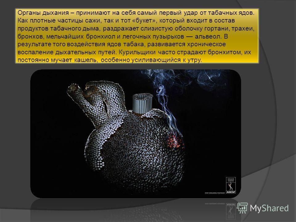 Органы дыхания – принимают на себя самый первый удар от табачных ядов. Как плотные частицы сажи, так и тот «букет», который входит в состав продуктов табачного дыма, раздражает слизистую оболочку гортани, трахеи, бронхов, мельчайших бронхиол и легочн