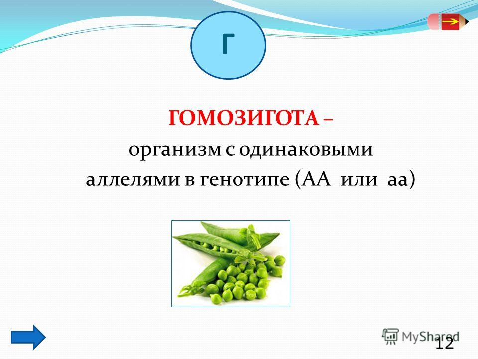 ГОМОЗИГОТА – организм с одинаковыми аллелями в генотипе (АА или аа) 12 Г